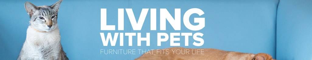 Living with Pets: Furniture that Fits Your Life