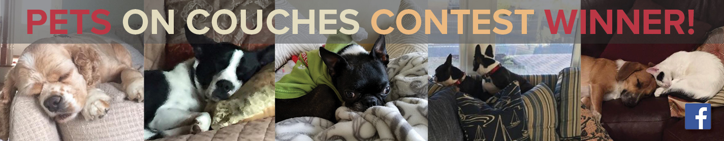 Pets On Couches Contest Winners!